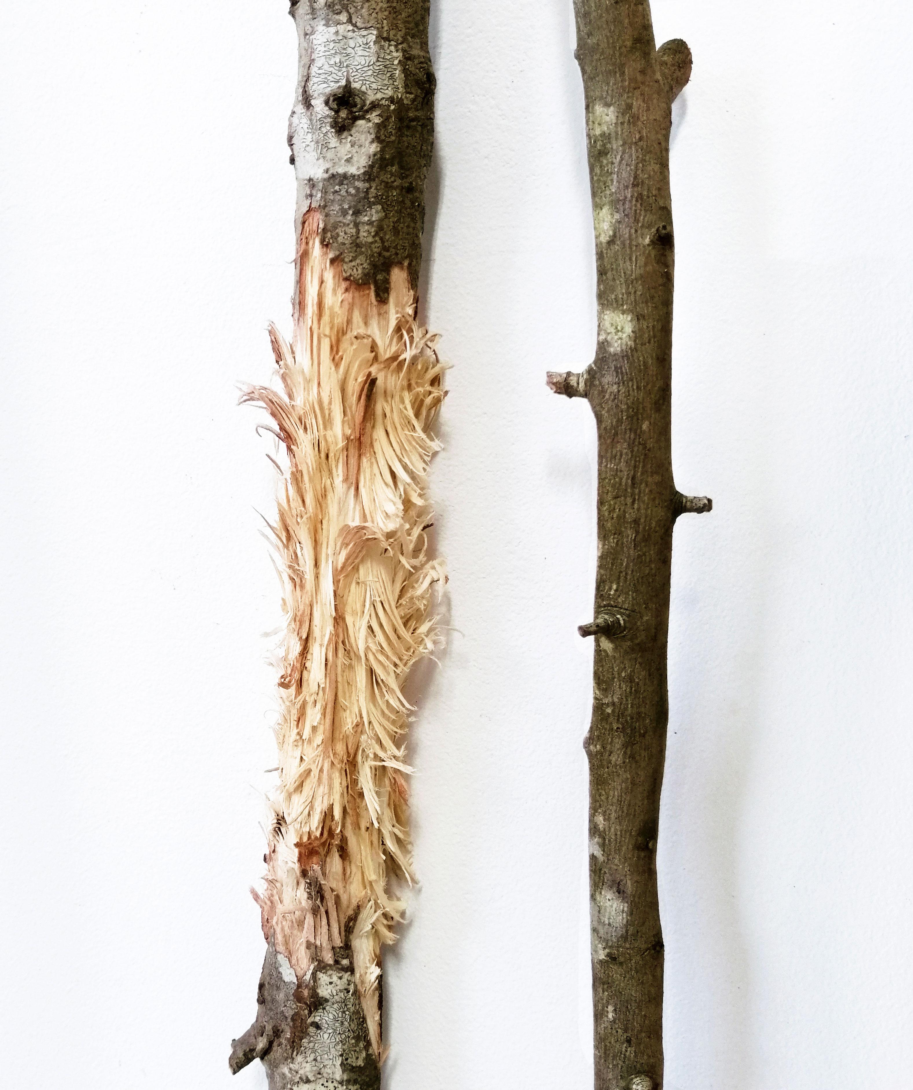 Bacille ou la résurrection - Sara Favriau
